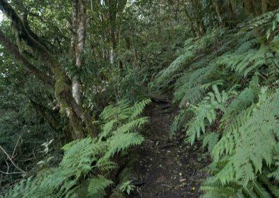 laurisilva-tenerife-anaga-trekking