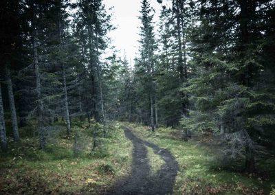forest-hiking-to-hamperokken-trail