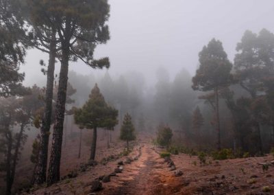 ghost-trail-pines-la-palma