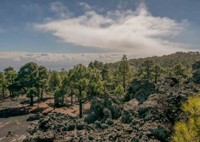 landscape-south-la-palma-trail