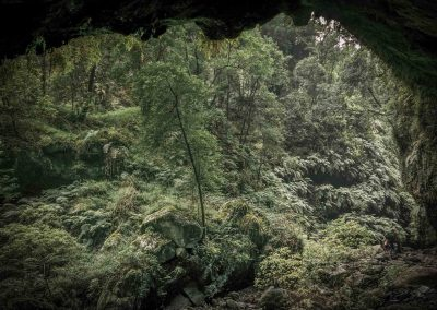 jungle-la-palma-vegetation-biosphere