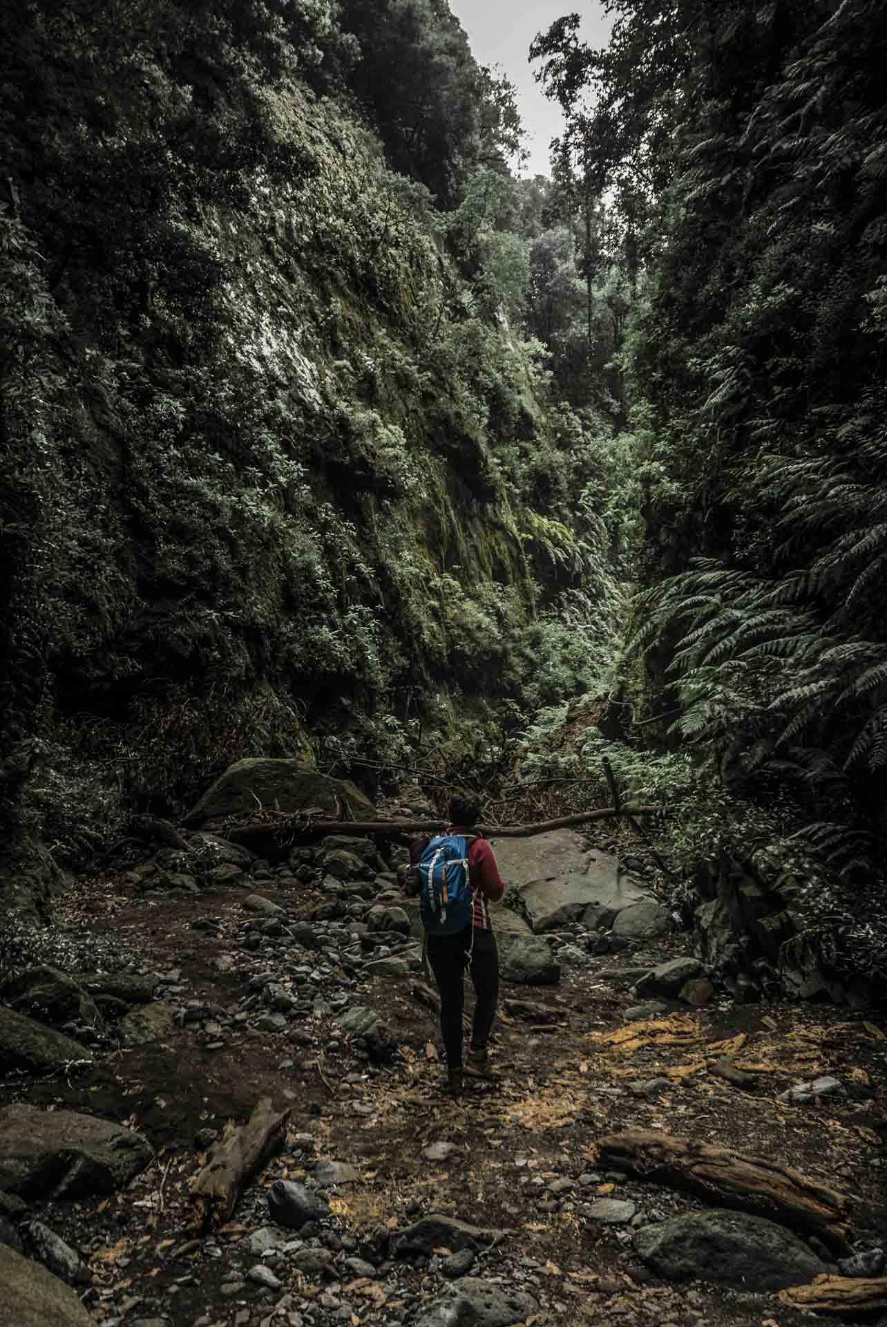 los-tilos-hiker