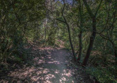 forest-birds-montserrat-walking