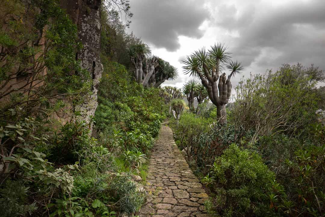 botanical garden gran canaria