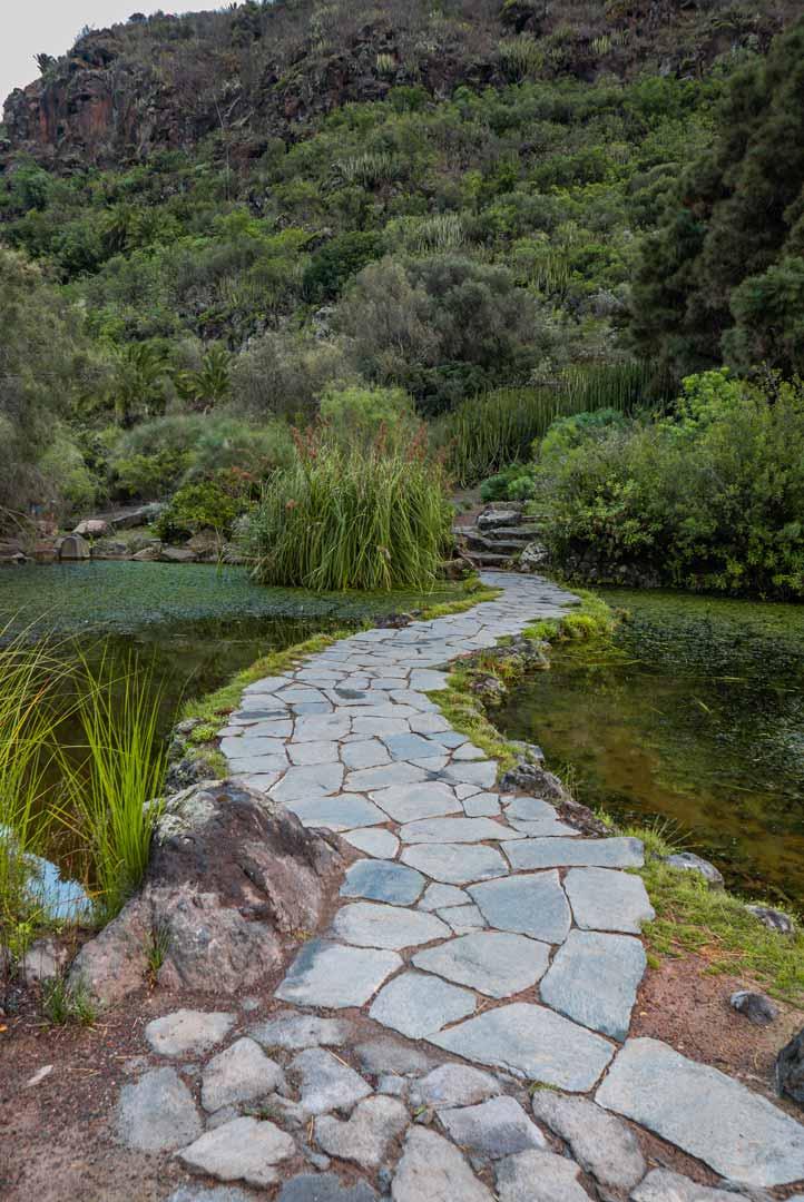 botanical-garden-canario-viera-clavijo